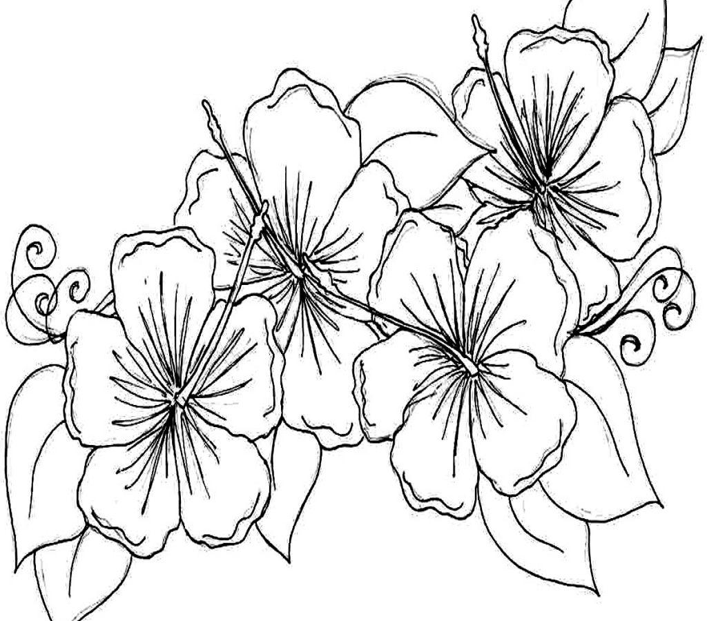 Hibiscus Flower Coloring Pages Hibiscusring Adult Free Printable