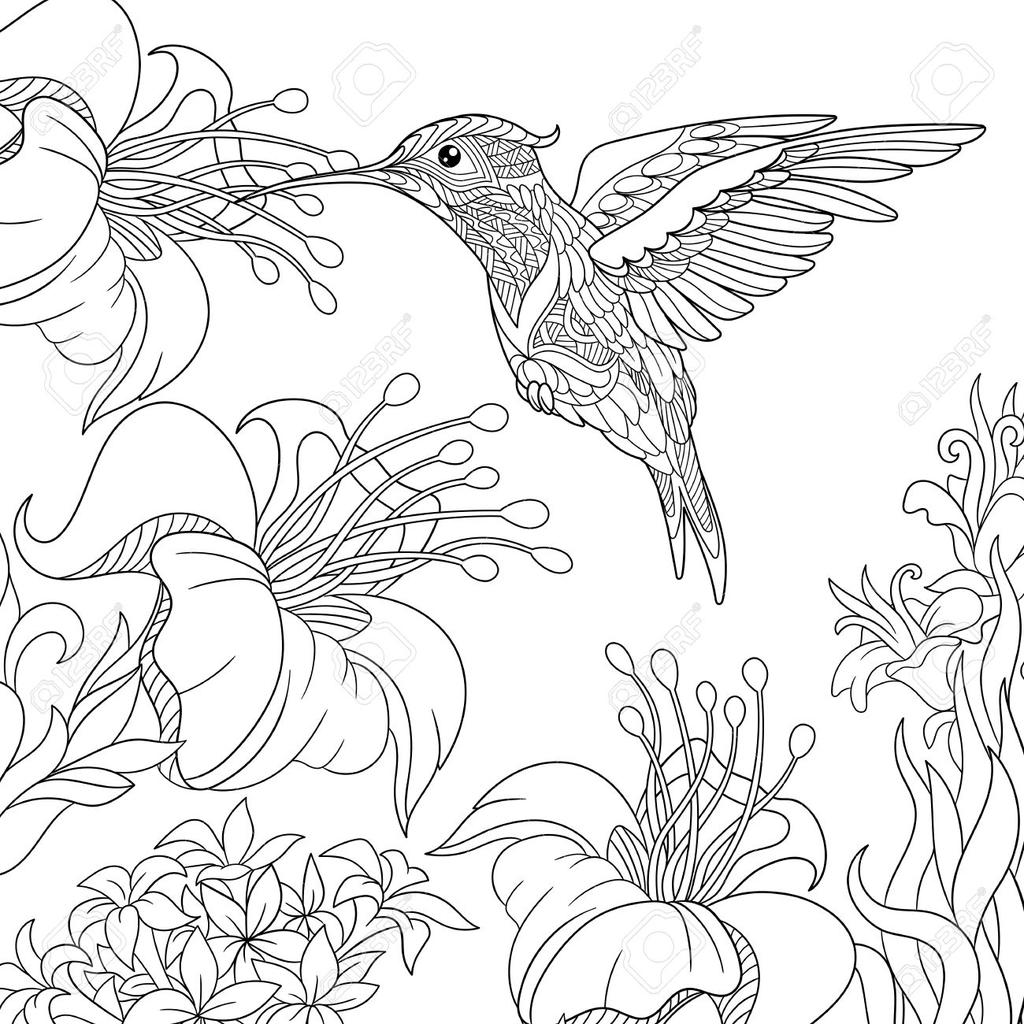 Hibiscus Flower Coloring Pages Hummingbird And Free Printable