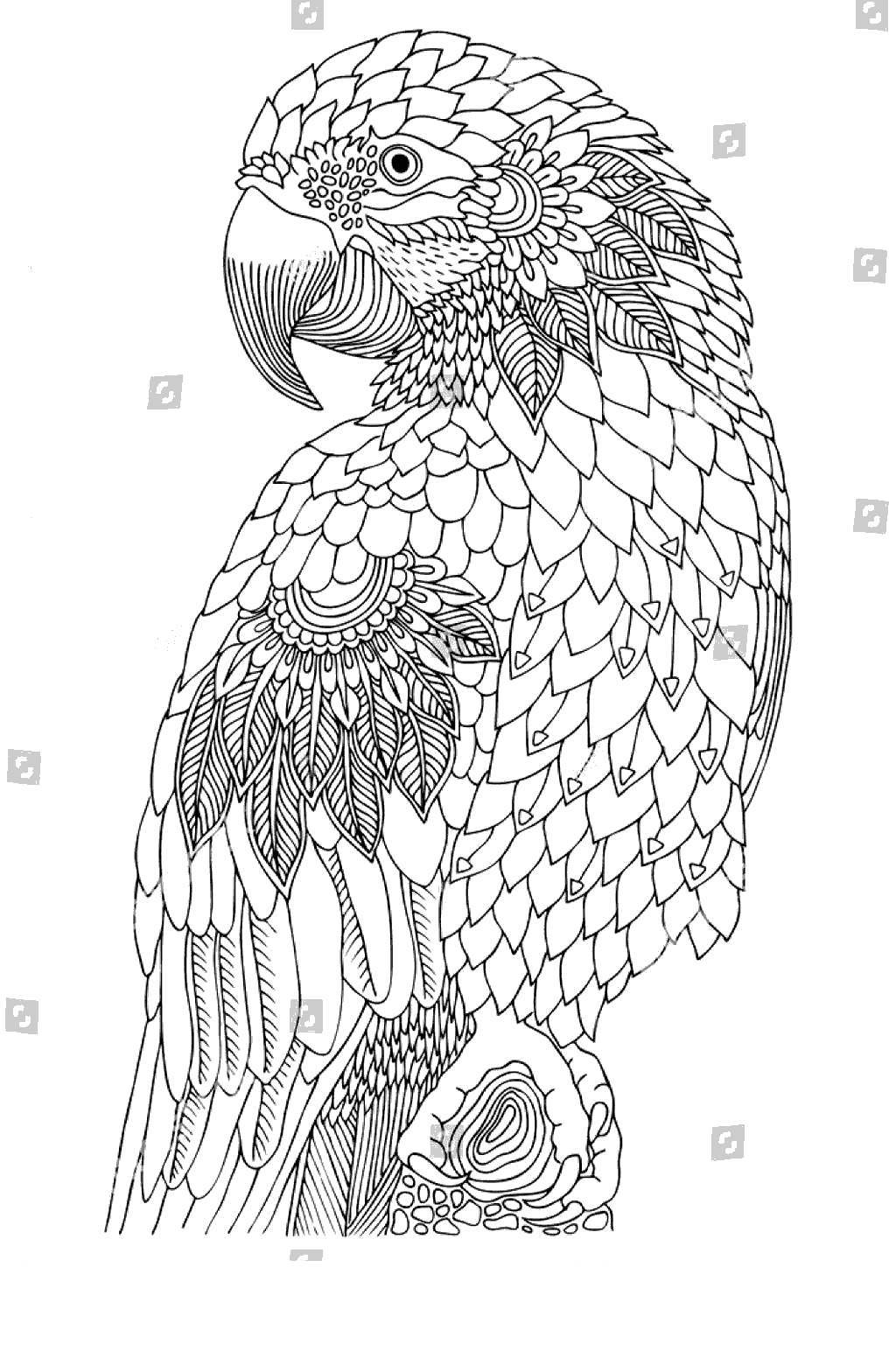 Free Macaw Coloring Pages Bird Kids printable