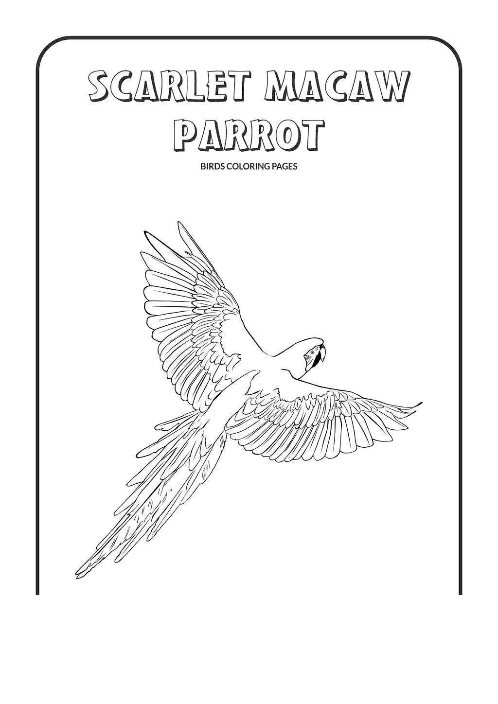 Free Macaw Coloring Pages Cool Scarlet printable