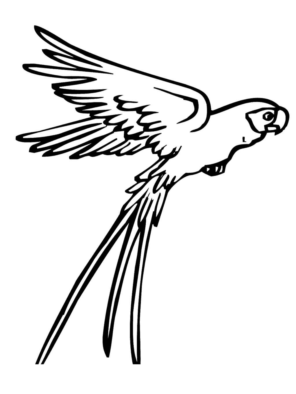 Free Macaw Coloring Pages Flying Worksheet printable