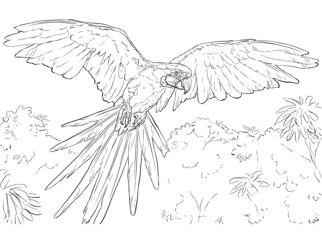Free Macaw Coloring Pages Linear printable