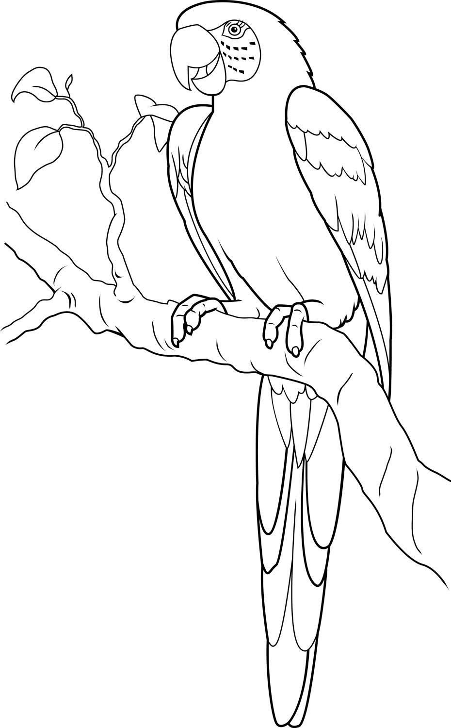 Free Macaw Coloring Pages On The Tree printable