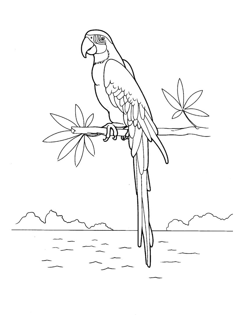 Free Macaw Coloring Pages Sketch printable