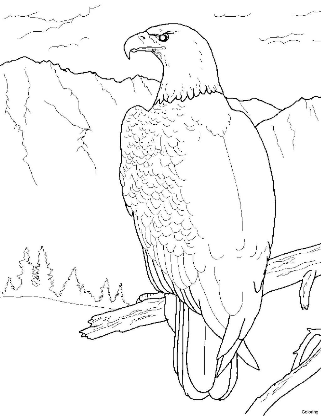 Free Bald Eagle Coloring Pages Caudata Co printable