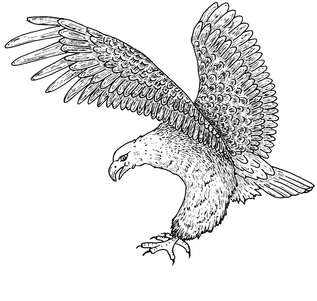 Bald Eagle Coloring Pages Kids Characters Free Printable