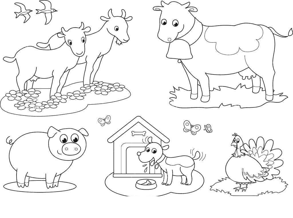 domestic animals coloring pages - photo#48