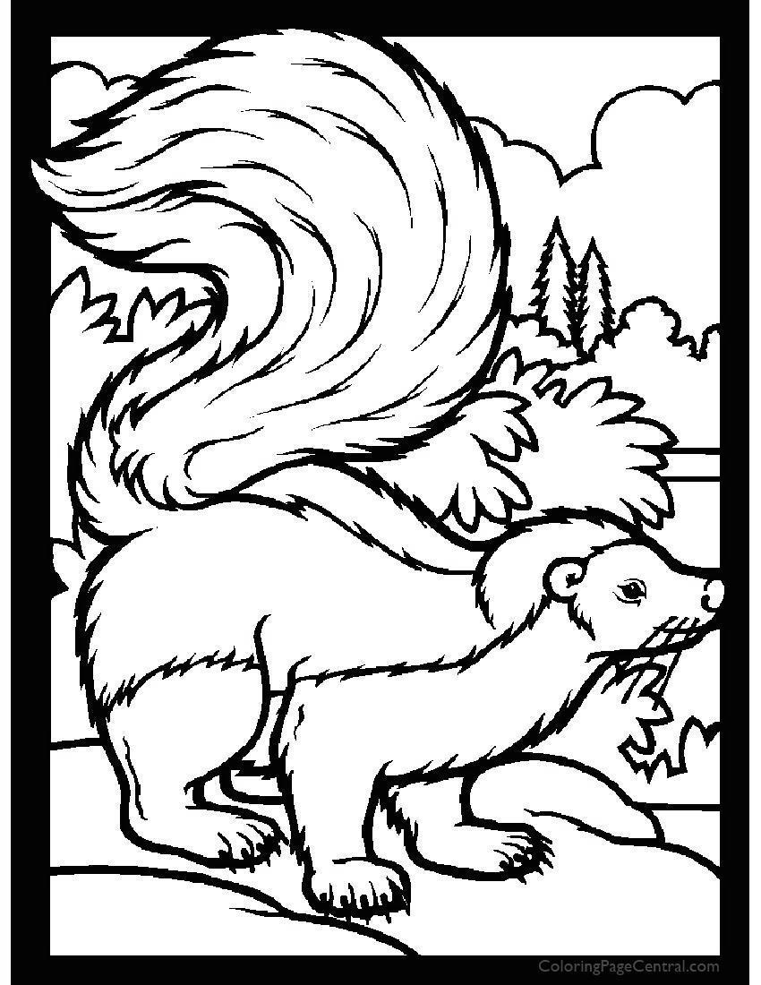 Realistic Skunk Coloring Pages Fu For Boys Free Printable Coloring