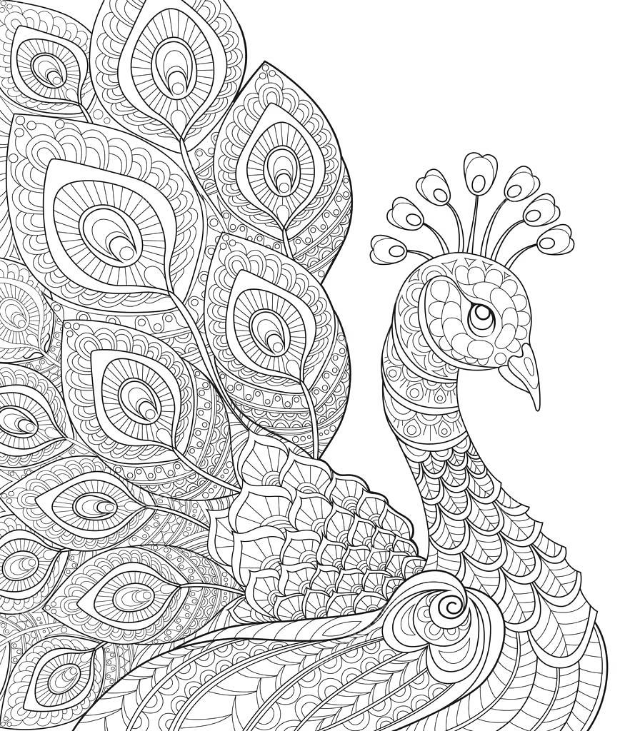 Free Best Peacock Coloring Pages Bird Book printable