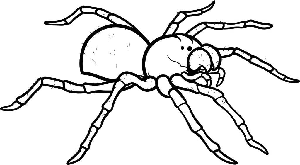 Free Iron Spider Coloring Pages Animal Hand Drawing printable