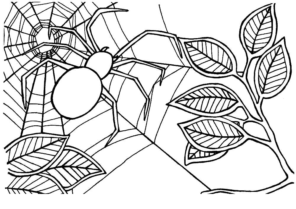 Free Iron Spider Coloring Pages Spider on the Tree printable
