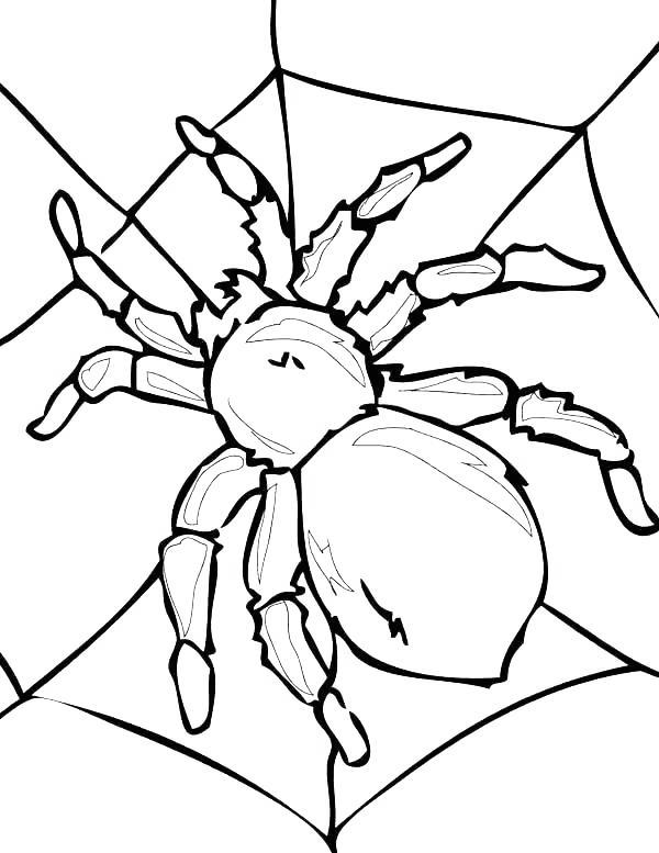 Free Iron Spider Coloring Pages Web of Spider printable