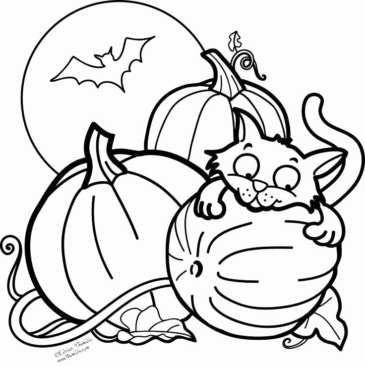 Free Bat and Black Cat Coloring Pages printable