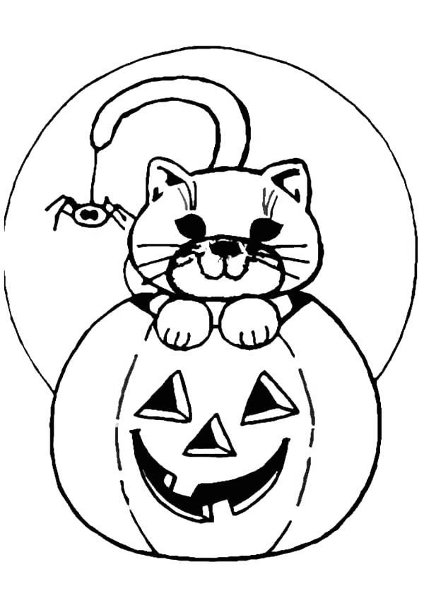 Spider And Black Cat Coloring Pages Free Printable